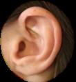 Logo oreille